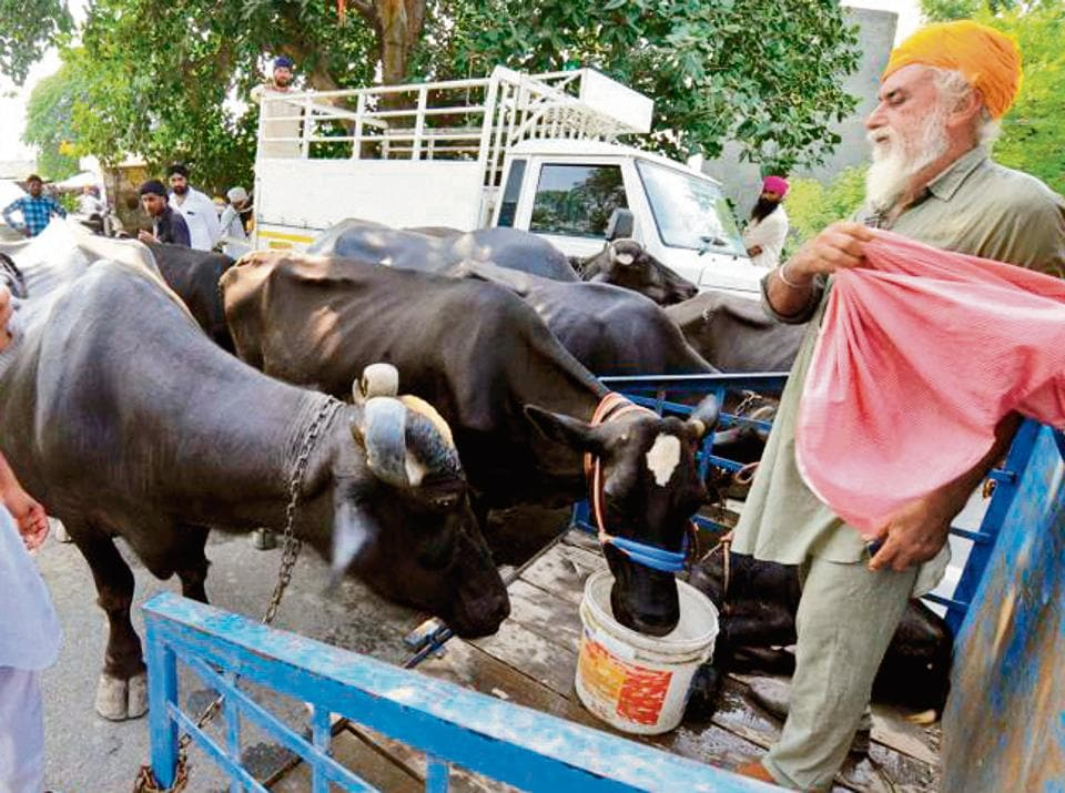 There are more than 5, 000 cattle heads in the flood-affected villages of Sultanpur Lodhi and 4, 000, including 1,500 cows in Shahkot.