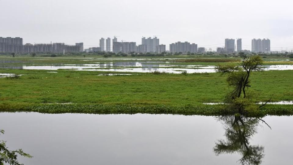 Najafgarh Drain and Jheel, the longest drainage system of Delhi, became an alternative wetland for the resident and migratory water birds