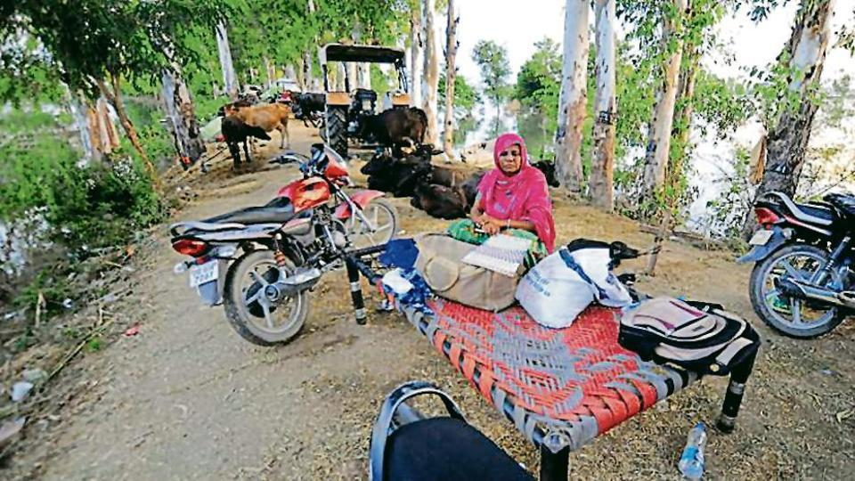 A flood-affected family with their  animals near village Mandala Channa of Lohian, Punjab  on Monday, August 26, 2019.