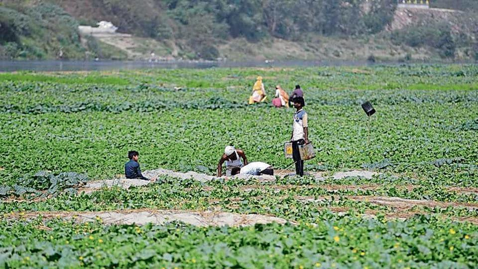 Farmers using illegal ground water pits farming around Yamuna river in New Delhi. Team Rakshak, a team of Private guards appointed by DDA to report illegal activities around banks of Yamuna River in Delhi.