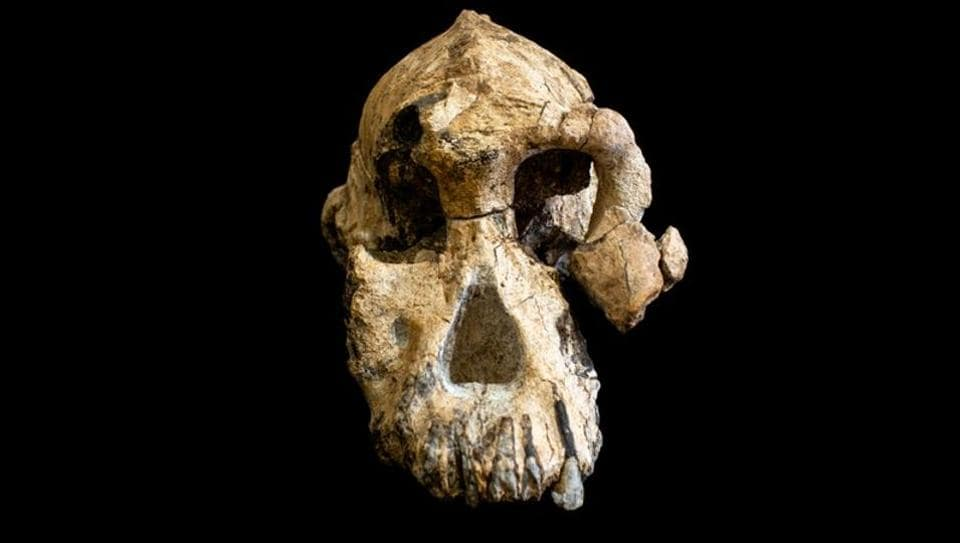 Scientists on Wednesday announced the landmark discovery in Ethiopia of a nearly complete skull of an early human ancestor that lived 3.8 million years ago