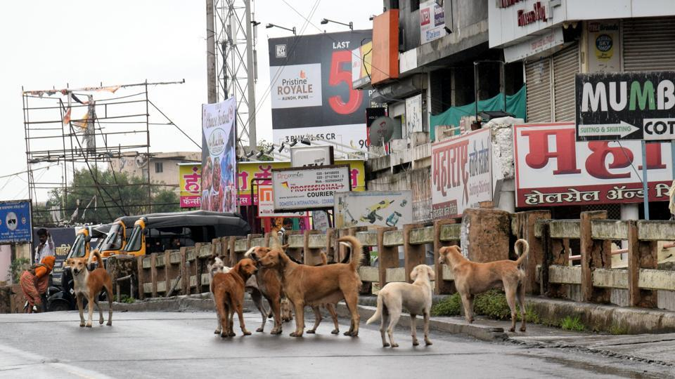 After 2-year delay, animal census in its final leg in Pune