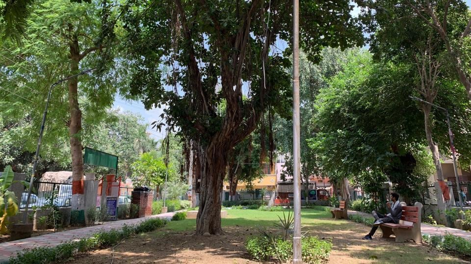The banyan tree stands in the centre of a neighbourhood park in Gurugram's Jacobpura.