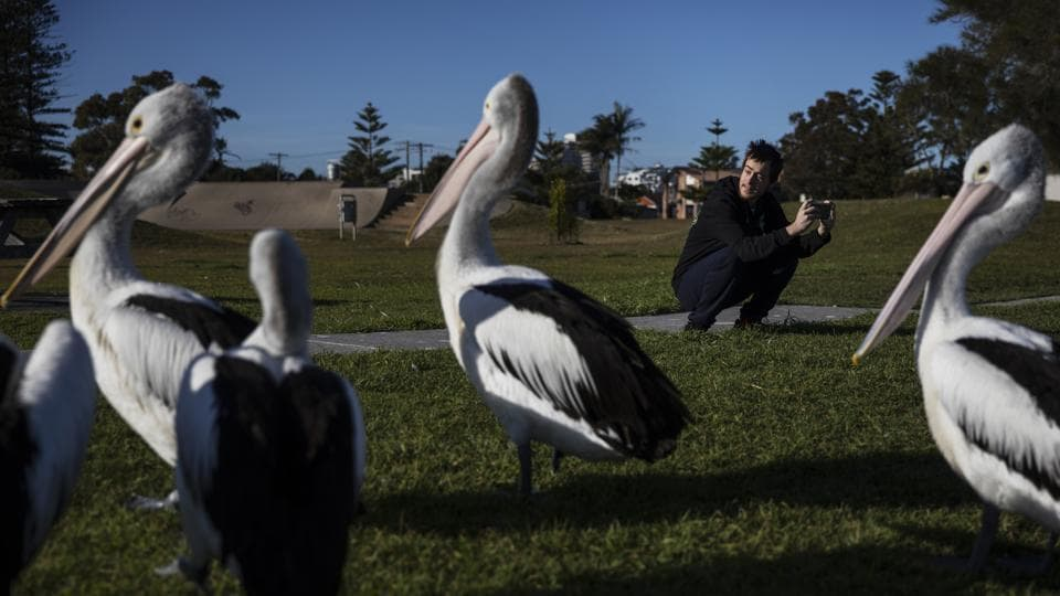 Sam Ware, 22, takes photos of pelicans while out on a morning walk from the hostel where he is staying at The Entrance, Australia. Sam was 19 when his opioid addiction began, a good kid with a good job as a factory machine operator. He loved photography and walking in the woods. He had little interest in drinking and none in drugs. (David Goldman / AP)