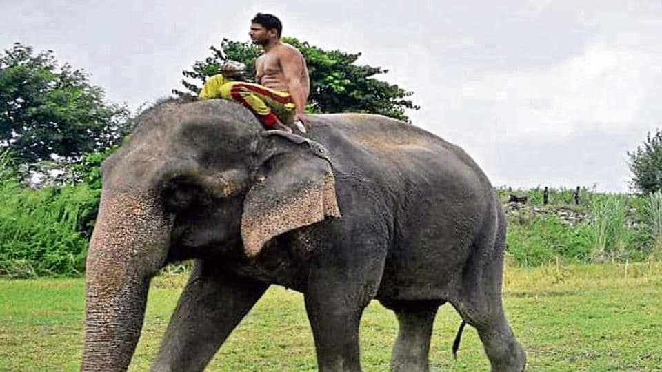 Lakshmi was last spotted on the banks of the river Yamuna near Shakarpur. According to officials in the Delhi forest department, there has been no trace of the 59-year-old elephant so far.