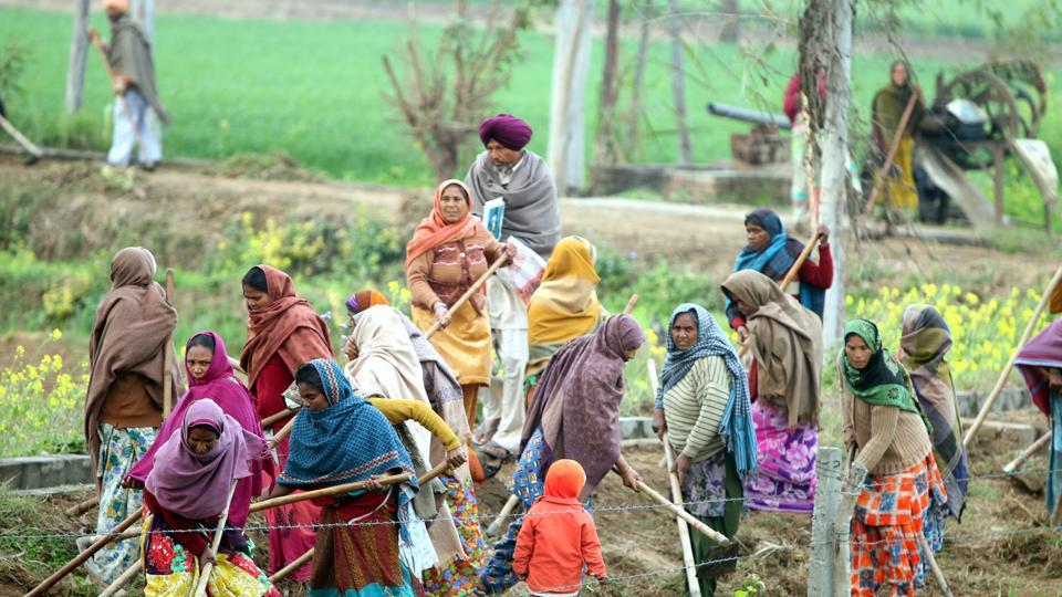 People working under the MGNREGA scheme at village at Bathinda, Punjab.