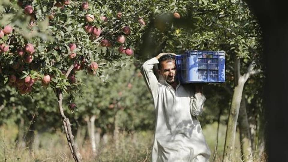 Kashmir is India's largest apple grower with an average annual production of nearly 2,200 metric tonnes. Apple industry fetches revenue of nearly Rs 1,300 crore, according to a state government website.