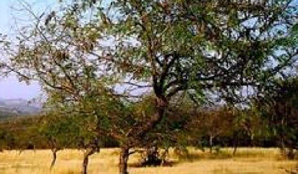 The Municipal Corporation of Gurugram (MCG) and the Haryana State Pollution Control (HSPCB) have instructed the construction work to expand a gaushala in the Aravallis, near Ghata village, be halted.