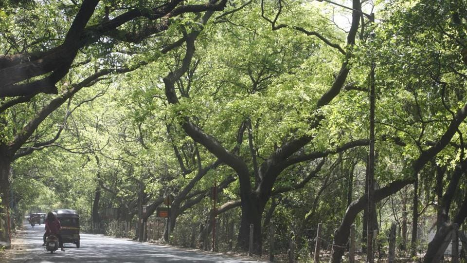 The status of Aarey Milk Colony, known as the city's green lung, has been mired in controversy. In 2015, the non-governmental organisation Vanashakti had filed a petition with the National Green Tribunal, asking the area be declared a forest.