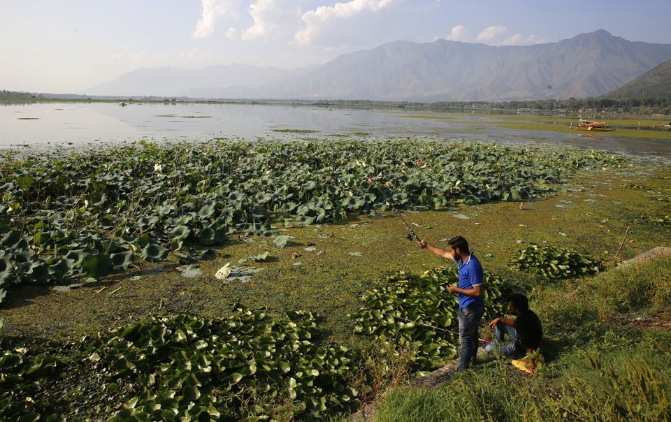 A man fishes in Dal lake, in Srinagar, Jammu and Kashmir.