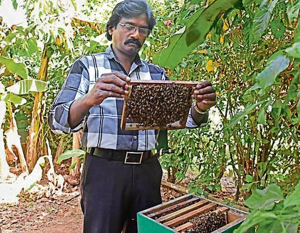 Johnson Jacob, the city's only beekeeper, has written to the state to reconsider felling of trees in Aarey Colony.