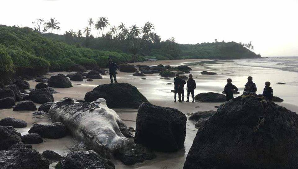 The dwarf sperm whale washed ashore at Bimbel beach in Goa's Vasco da Gamaon September 9.