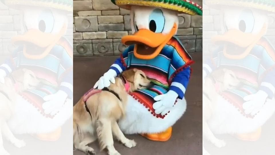 The dog named Nala is lying on Donald Duck's lap.