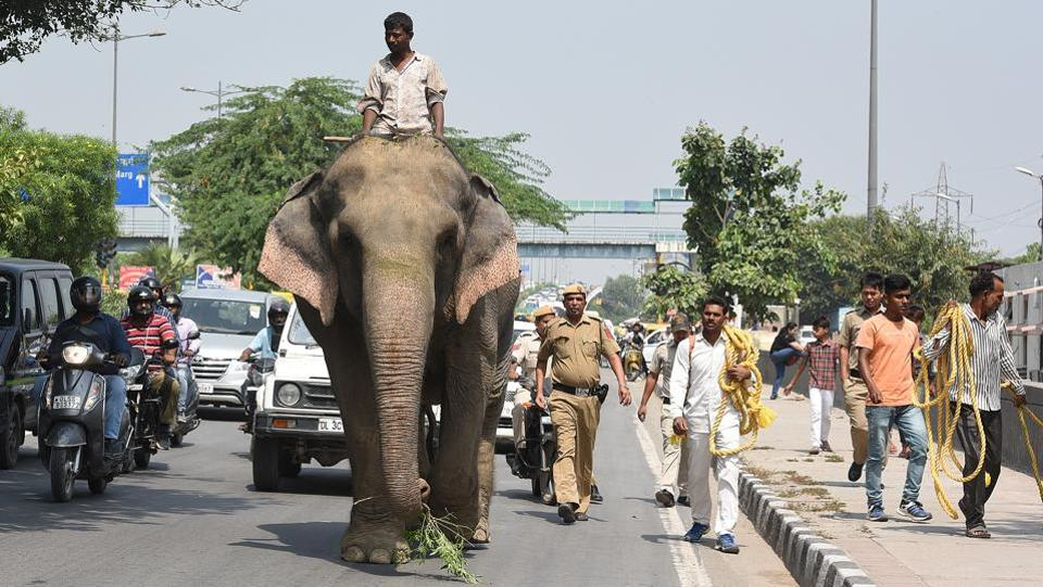 Elephant Lakshmi being taken to the ITO nursery after it was found by the Delhi forest department, at Vikas Marg, Shakarpur, in New Delhi. (Raj K Raj / HT Photo)