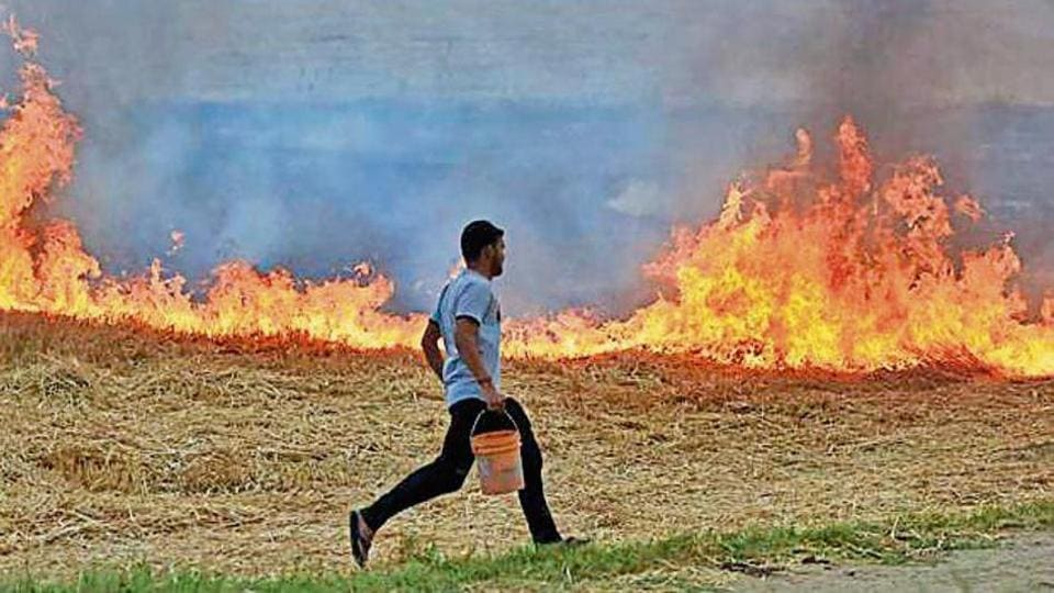 Stubble burning is one of the major sources of pollution in the national capital during winter season.
