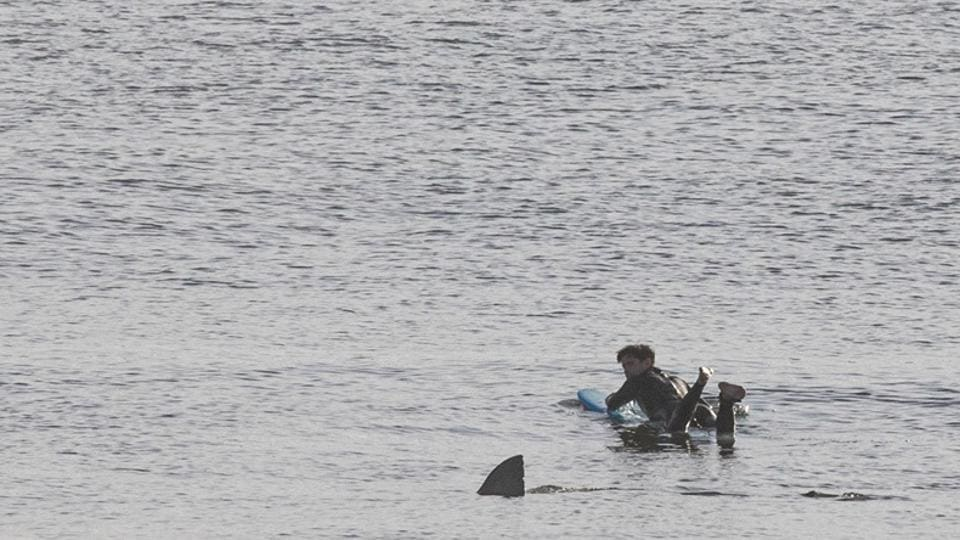 The image shows a fin passing close by a man in a wet suit.