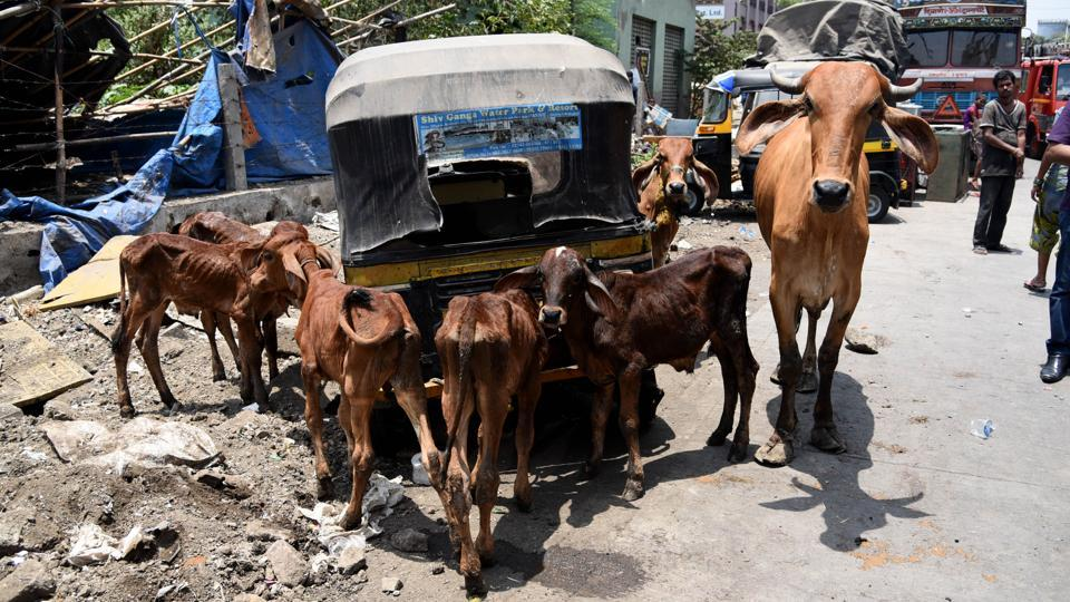 A total of 61 animals, chiefly livestock, were killed as swiftly moving waters from overflowing canals wreaked havoc in some of the city's residential areas, businesses, and public spaces.