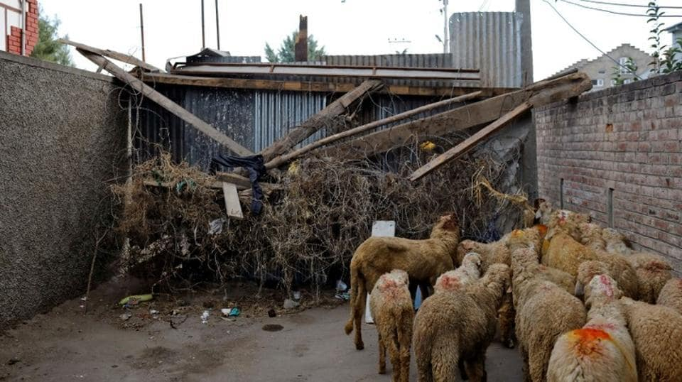 A herd of sheep pass through a barricade set up by the residents. (Danish Siddiqui / REUTERS)