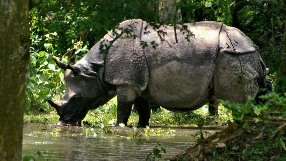 A rhinoceros is seen beside Kaziranga national park. Assam governments has collaborated with Instagram to promote tourism in the state.