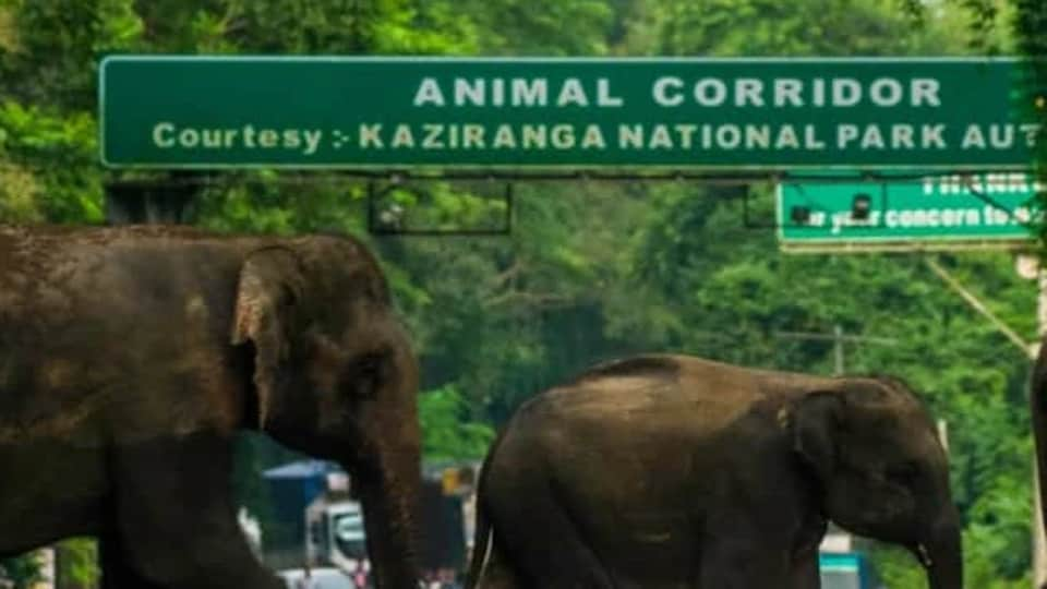 The two poachers fled after attacking the police at Kaziranga National Park.