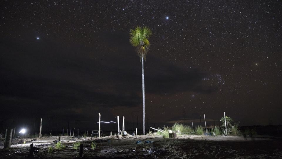 In this photo made with a long exposure and artificial light, a tree stands in a former mining camp seized by police in Peru's Tambopata province. The area known by miners as