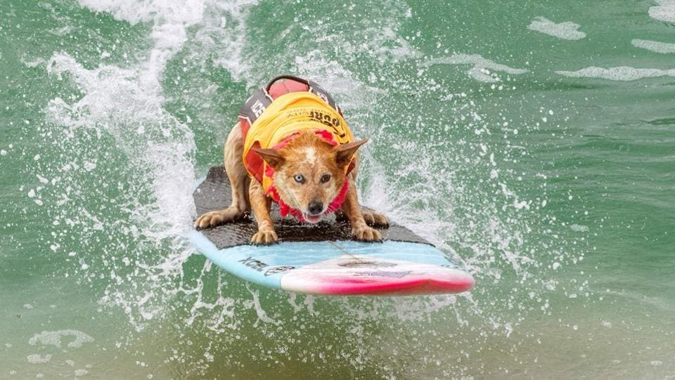 Skyler Henard competes in the 2019 Surf City Surf Dog contest at Huntington Beach, California, US. (Kyle Grillot / AFP)