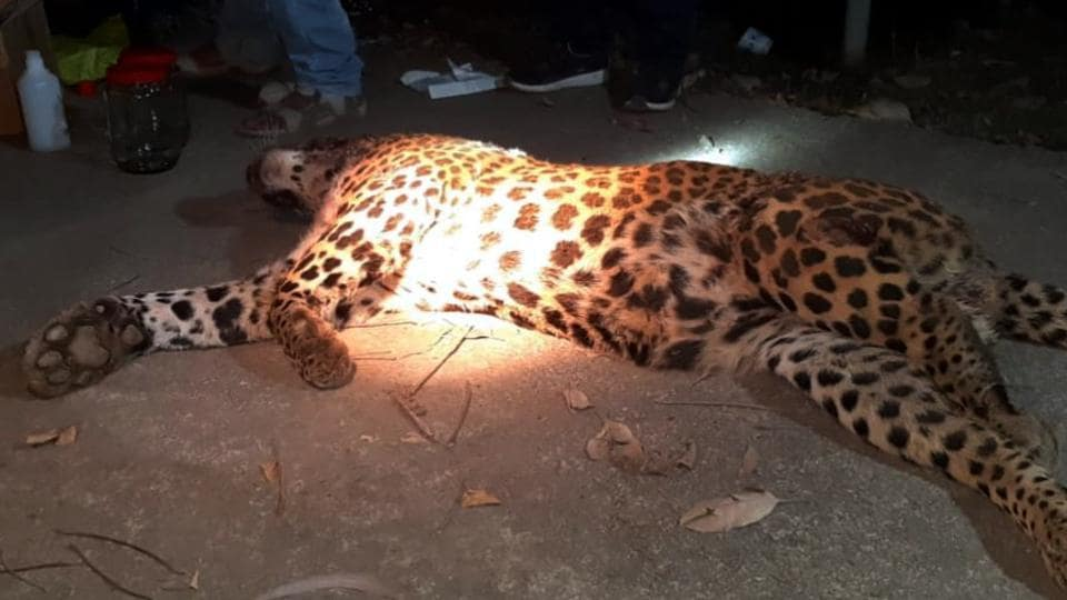 The forest department had engaged a hunter who tracked the leopard's movements for nearly 10 days before killing it.