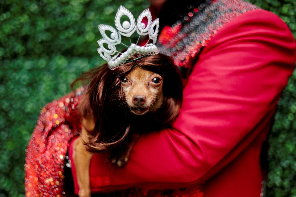 A pet dog dressed as a crowned Miss Universe is photographed at a pet fashion show celebrating World Animal Day in Quezon City, Metro Manila, Philippines, October 6, 2019.  (REUTERS/Eloisa Lopez)