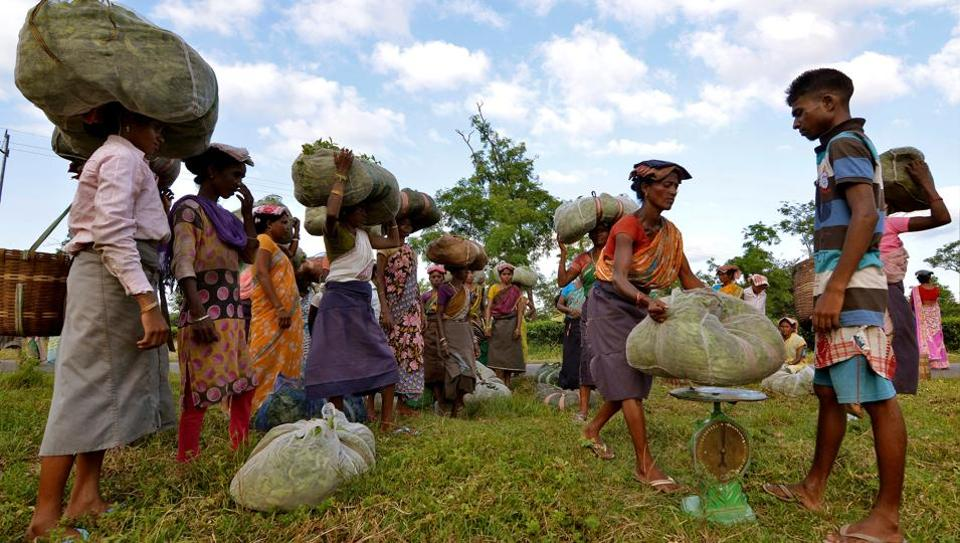 Tea garden workers gather to weigh tea leaves after plucking them at a tea estate in Assam's Nagaon district,.