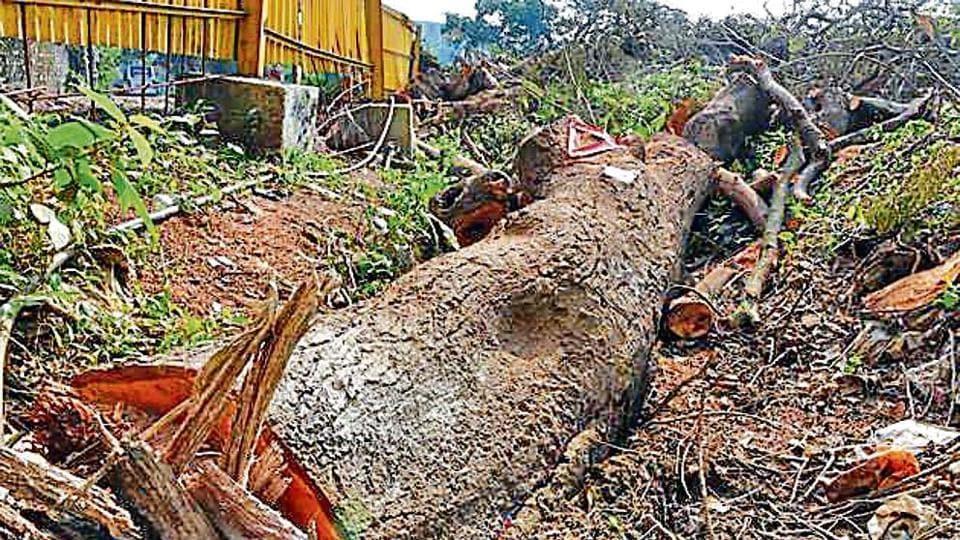 Over 2,000 tress were cut at Mumbai's Aarey Colony.