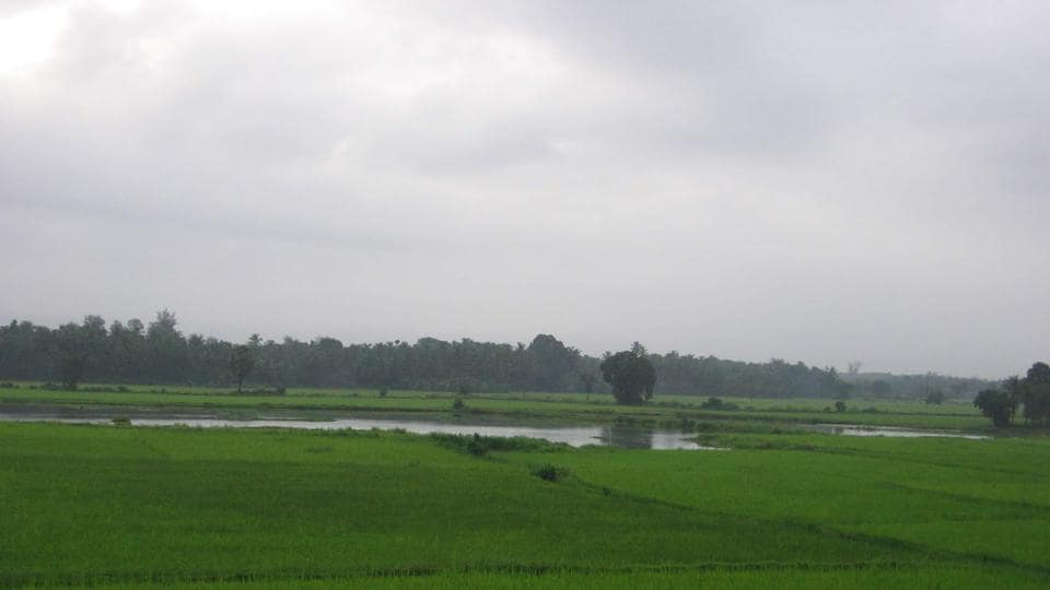 Goa's coastal lands - also known as khazans - are a source of food for its villagers who reside in the coastal regions.