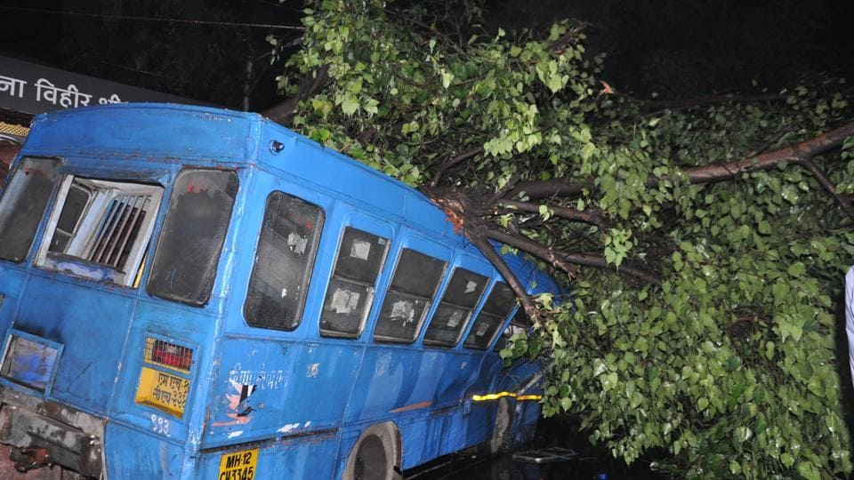 A PMPML driver, Vijay Nivangune, 40, died after a tree fell on the bus on Tilak road