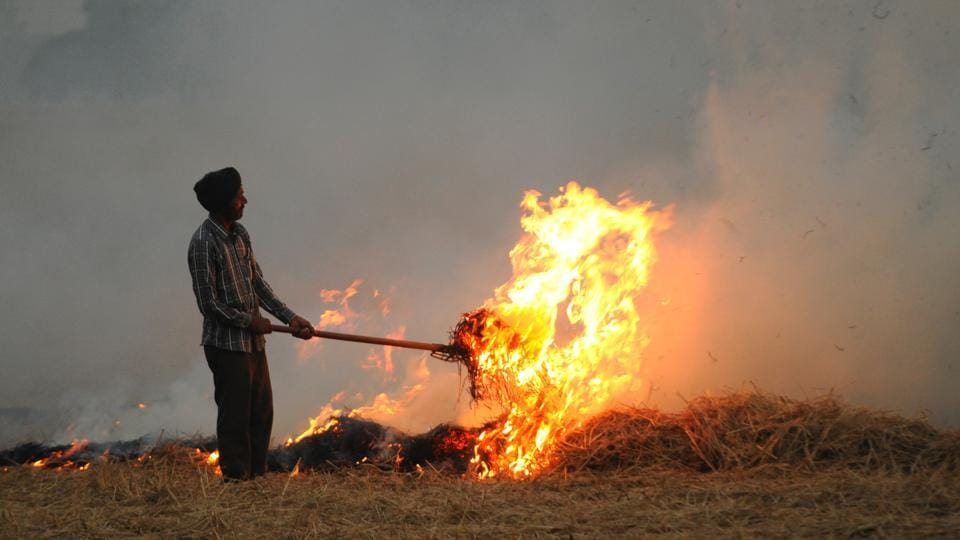 File photo of a farmer in Punjab burning paddy straw in his field.