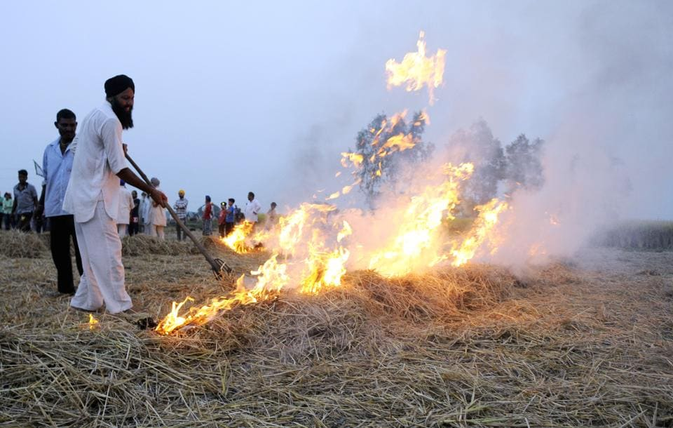 Members of BKU burning stubble at the  Fatepur Bakshiwala village on Bhadson Road in Patiala