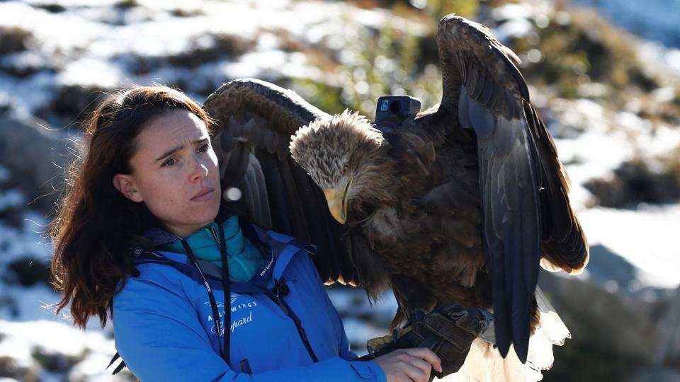 Victor a nine year old white-tailed eagle equipped with a 360 camera.