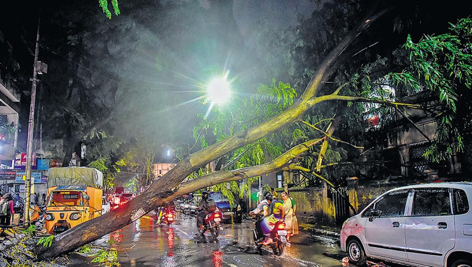 A tree fell across a road near Natubaug road, after heavy rains lashed the city on Wednesday night.