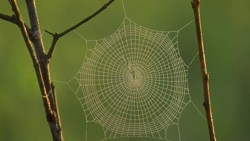 Scientists from the Zoological Survey of India (ZSI) have managed to barcode at least 100 species of spiders based on their DNA, in the largest exercise of its kind in the country.