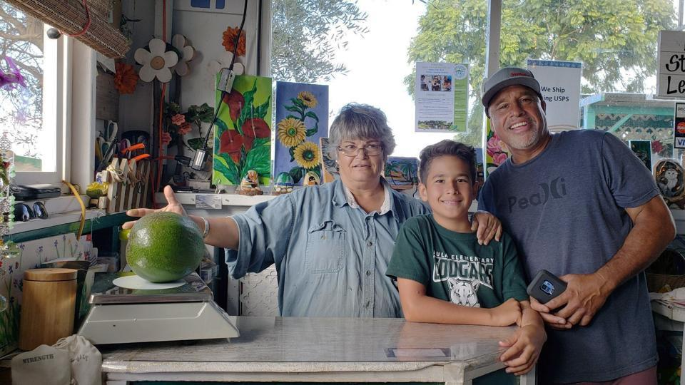 The image shows the first weigh of the avocado at Kula Country Farms.