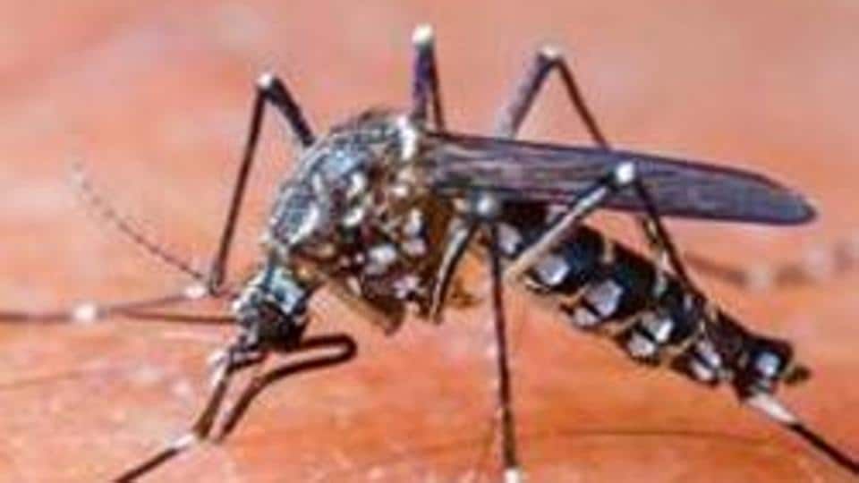District Inspector of School (DIOS) and Basic Shiksha Adhikari (BSA) give directions to schools in Lucknow on dengue prevention. (Representational image)
