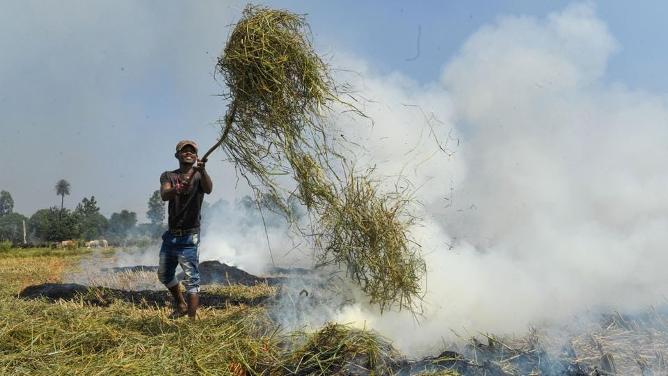 A farmer burns paddy stubbles in a field in a village at Ambala district in Haryana. (PTI)