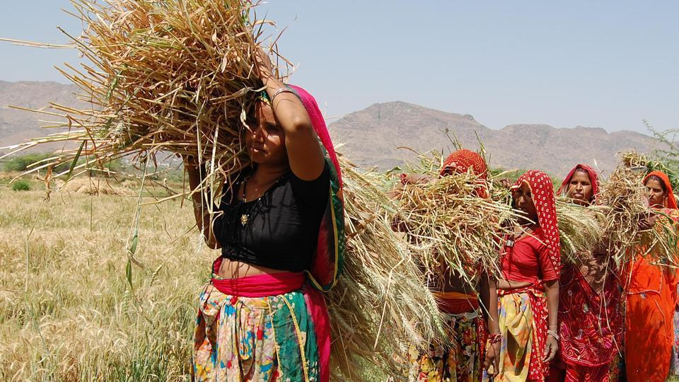 New subsidy scheme for farmers in Rajasthan will focus on women for gender mainstreaming