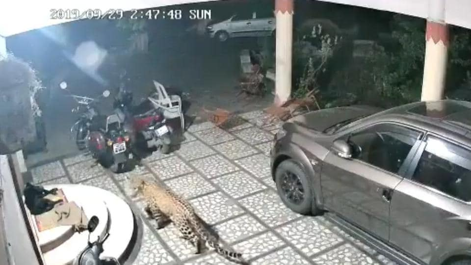 The video shows the leopard walking stealthily towards the dog sleeping at the doorstep.