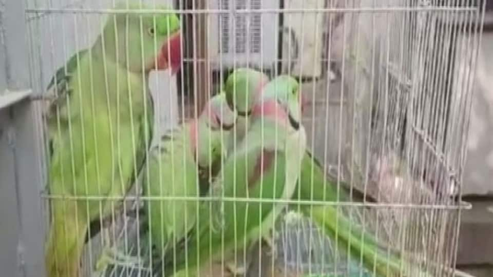 Image shows the parakeets, taken to a Delhi court, inside a cage.