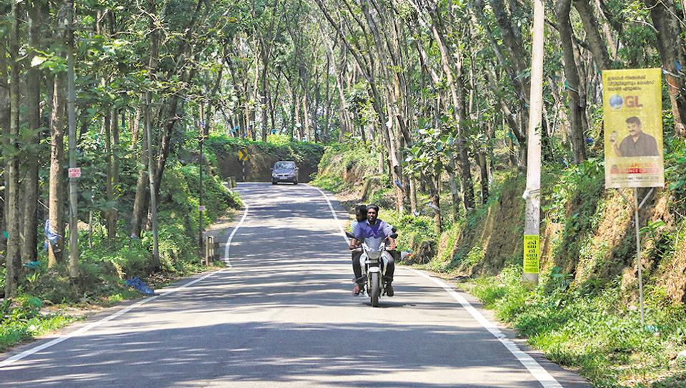 Men drive along a road cutting through a rubber estate with rubber trees on either side in Koottamveli, Idukki, Kerala. Image used for representational purpose only.