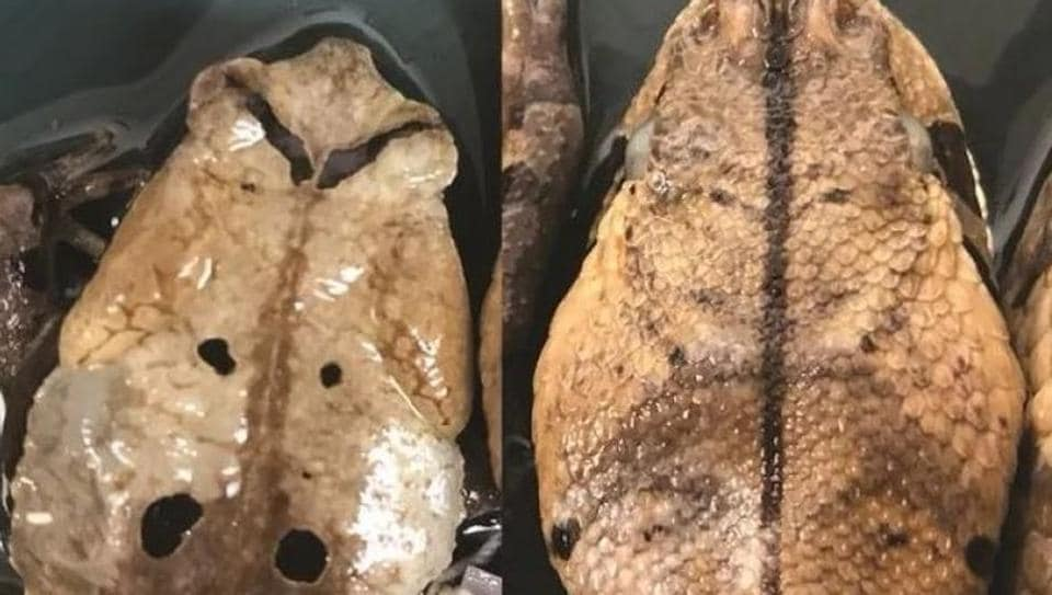 One part of the image shows a toad and the other shows a snake.