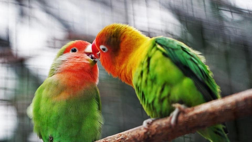 The study, published in the journal Conservation Biology, noted that the chicks of noise-exposed birds were smaller than the young ones from quiet nests.