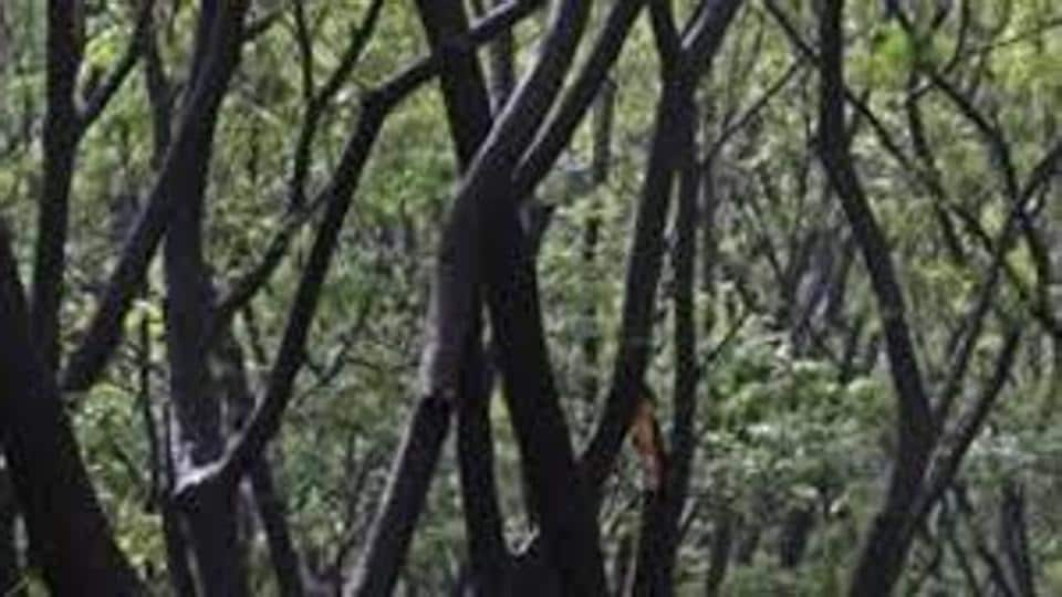 Swapna, a forest beat officer, suffered minor injuries when the crowd attacked the department personnel near Kothapalli village in Nennel Mandal.