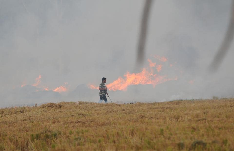 A farmer burning paddy stubble at Bhat Majra village in Pehowa of Haryana on Thursday.