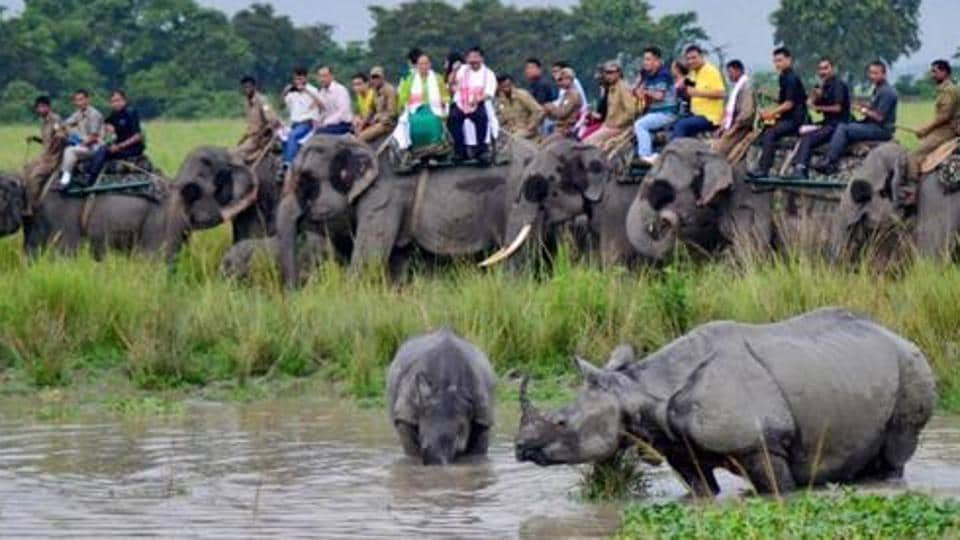 Forest department officers indicated that poachers from Assam, with the help of locals, shot dead the one-horned rhino at 54 beat area inside the western range of the Jaldapara national park.