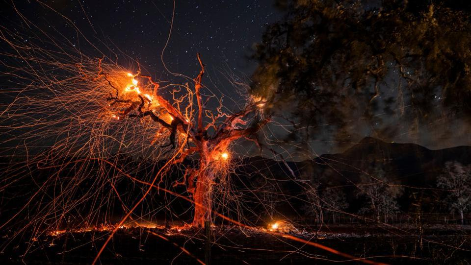 A long exposure photograph shows a tree burning during the Kincade fire off Highway 128, east of Healdsburg, California. The state braced on October 29 for the most powerful winds this season that threatened to spread destructive fires raging in the state and spark new blazes. (Philip Pacheco / AFP)